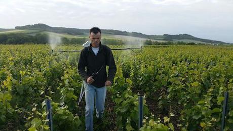 Guest Writer Series   № 6   Caroline Henry on Bioenergetic Wines