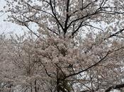 Reasons Visit Seoul Spring