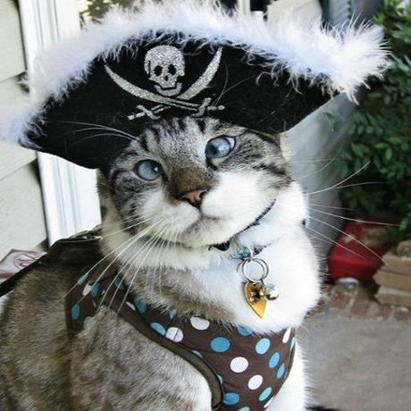 Top 10 Plundering Cats Dressed As Pirates