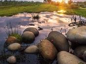 Causes, Effects Solutions Habitat Loss Destruction