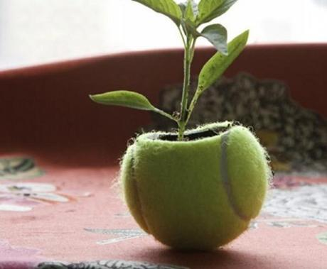 Tennis Balls Transformed Into Planters
