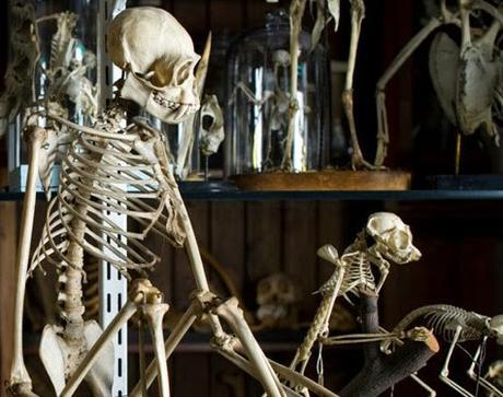 #London Summer #SchoolHolidays - The Grant Museum of Zoology @GrantMuseum