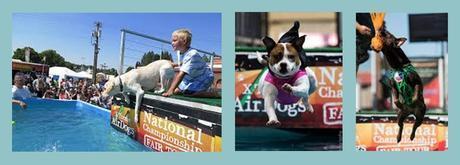State Fair Dog Town