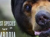 Best Species Cambodia