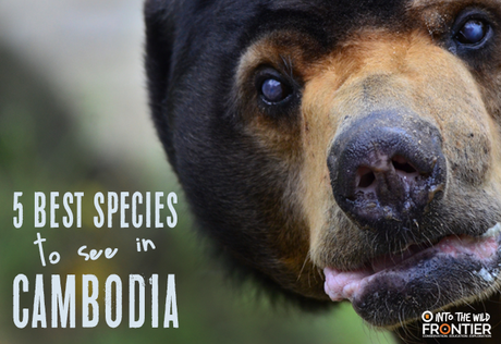 The 5 Best Species To See In Cambodia