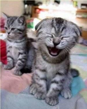 laughing kittie