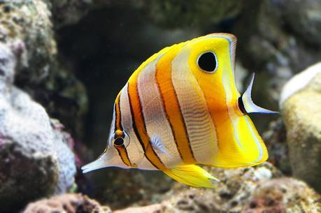 snorkel Watamu Damselfish, Angelfish Butterflyfish