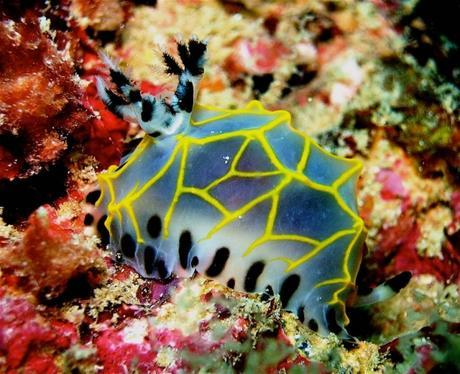 Nudibranch. Snorkel Watamu. Photo Turtle Bay Dive Centre