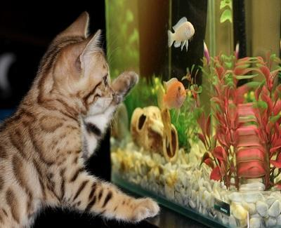 aquatic life in your home1