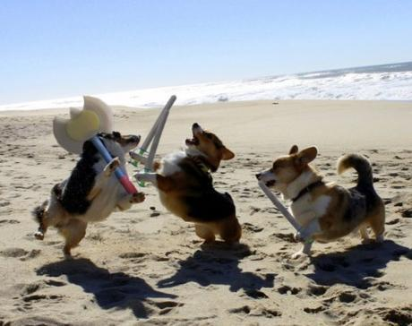 Naughty Beach Dogs