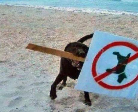 Naughty Beach Dog