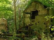 Ruins Woods