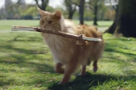 Top 10 Barking Mad Cats Who Want To Be Dogs