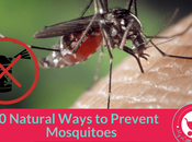 Natural Ways Prevent Mosquitoes