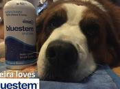 #BadBreath Blues: Keira Tries Easy #dog #dental Care with #bluestempets Products