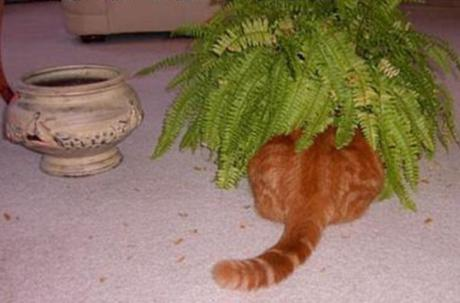 Funny Cats Tail
