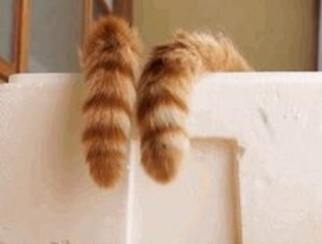 Funny Cats Tails
