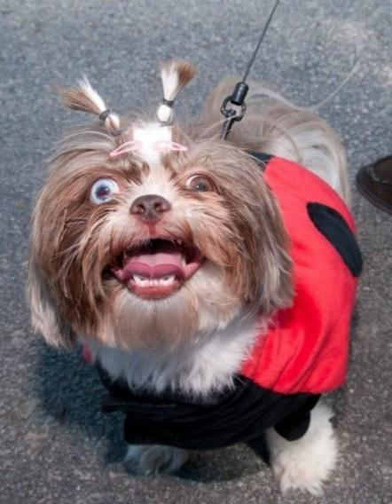 Dog With Crazy Looking Eyes