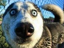Dogs That Have Crazy Eyes