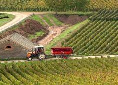 Burgundy harvest in the Côte d'Or. ©RudiGoldman. All Rights Reserved.