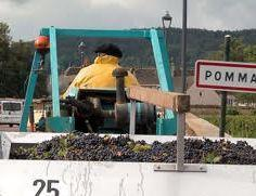 Harvested grapes travelling past Pommard to a Meursault winery. ©RudiGoldman. All Rights Reserved.