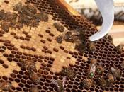 London Honey Show Discount Lancaster