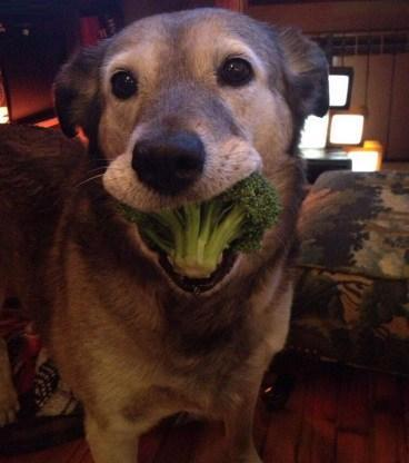 This Dog Loves Vegetables
