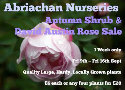 Autumn Shrub Sale 2016
