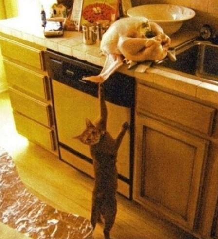 Naughty Cat Caught In The Act