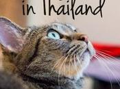 Downs Owning Pets Thailand