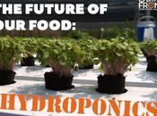 Future Food: Hydroponics