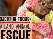 Project Focus: Thailand Animal Rescue