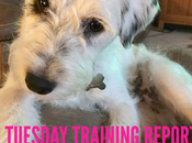 Tuesday's Training Report with Gear!