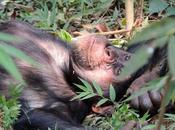 Chimp Paradox Stone Life