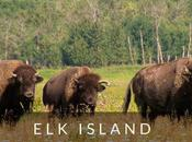 Island National Park: Best Places Bison!