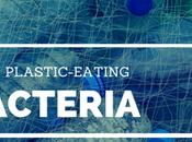 Plastic-Loving Bacteria Reduce Plastic Waste Landfills?