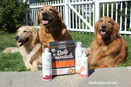 grooming your dog with Isle of Dogs grooming products review and giveaway