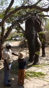 My daughter telling Tembo to 'talk!'.