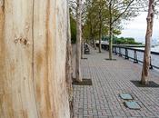 Friday Fotos: Naked Tree, Down River