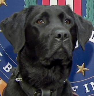 Crime and Science Radio: Meet Iris, the FBI's Only Electronic-sniffing Dog: An Interview with Jeffrey Calandra