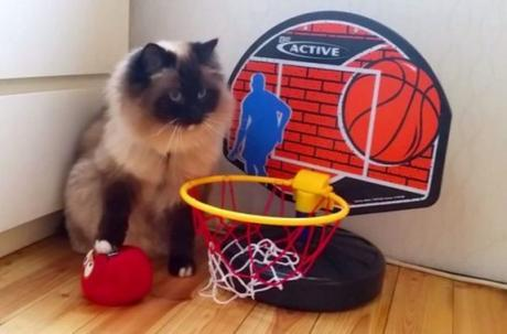 Cat Playing Basketball
