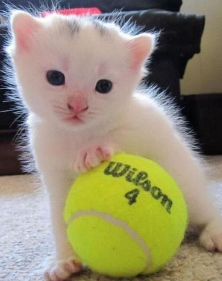 Cat Playing Tennis