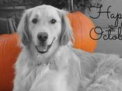 October Pumpkins Goldens!
