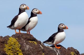 Views wanted on cross-boundary protection areas for marine birds
