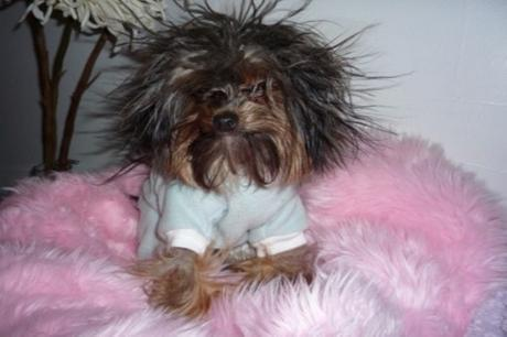 Top 10 Dogs Who Are Having A Bad Hair Day