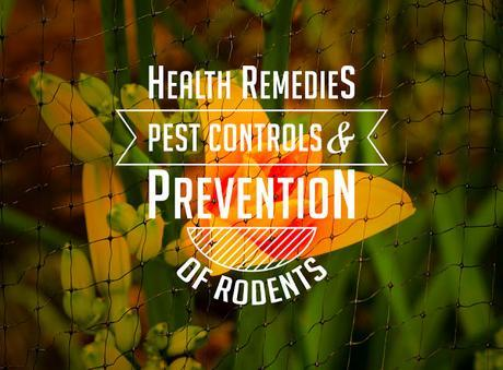 Health Remedies: Pest Control and Prevention of Rodents