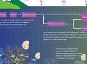 Causes, Effects Solutions Ocean Acidification