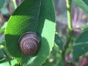 Year Snail