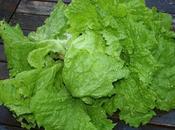 Late Salads