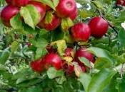 Orchards Orchard Thoughts Saving Bees